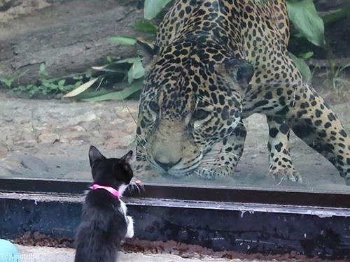 犬や猫が動物園を訪れる00