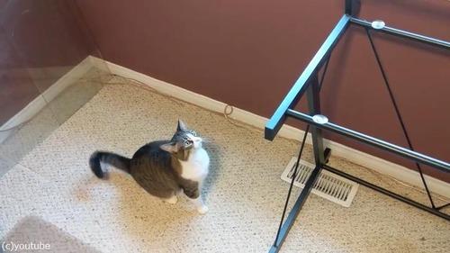 お気に入りの机の天板を外されて困惑する猫01