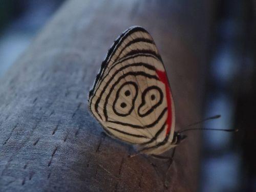 89番の蝶々02