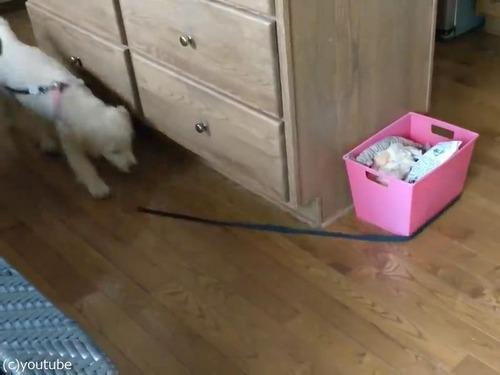 家の中で運動してくれる犬00
