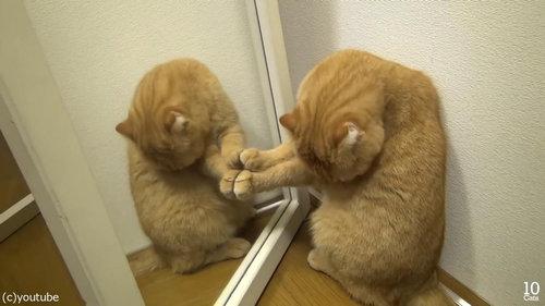 猫10匹と大きな鏡02