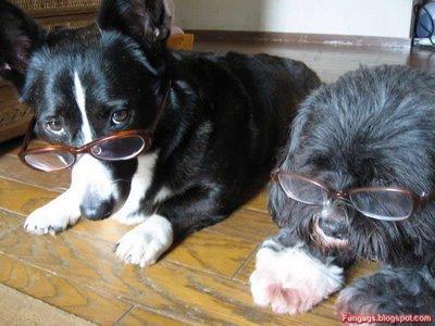 メガネ犬09