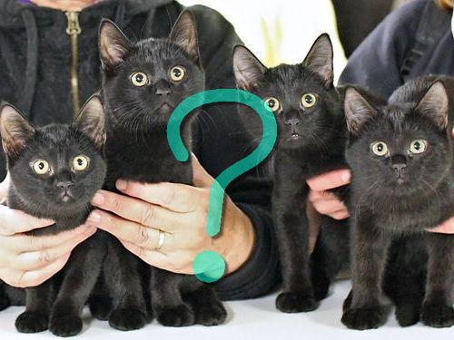 黒猫のオーディション00