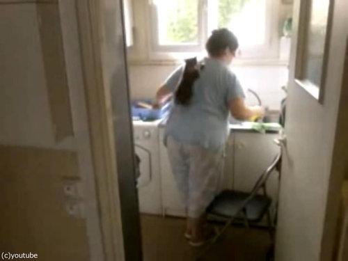 洗い物と子猫04