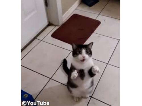 「お散歩させてくださ〜い!」猫のかわいいおねだり00