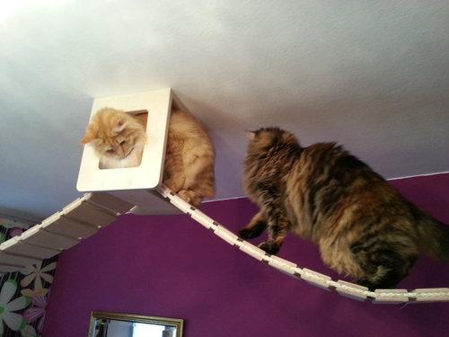 猫用のつり橋09