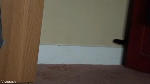 ママ猫が、迷子の子猫を連れ帰るとき03