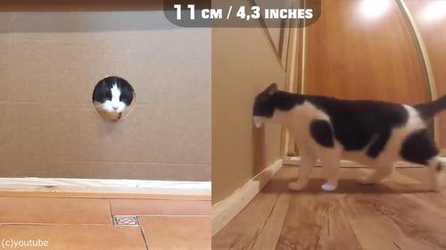 猫が通れる穴のサイズを実験05