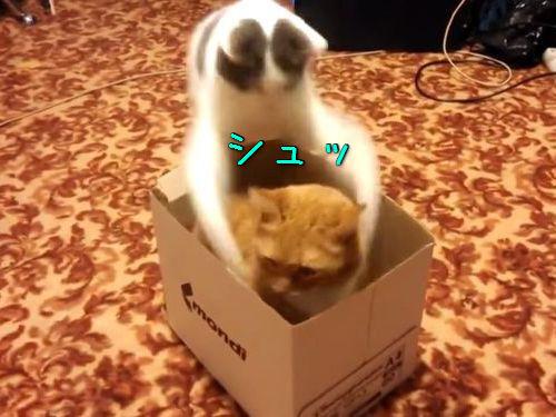 猫2匹と1箱00