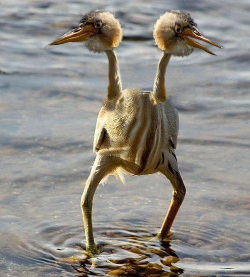変なルックスの鳥06