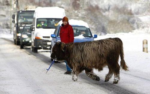 道路を渡る動物12