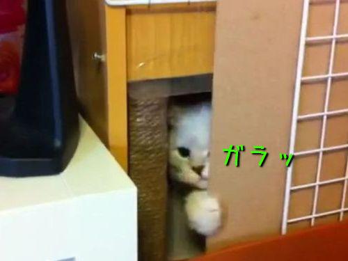 無理する猫