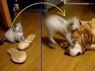 子猫が犬に向かって必殺のジャンプ攻撃