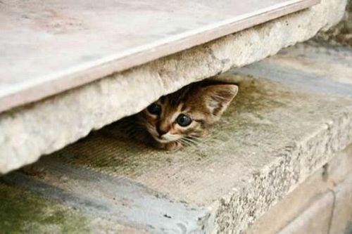 猫は見ている16