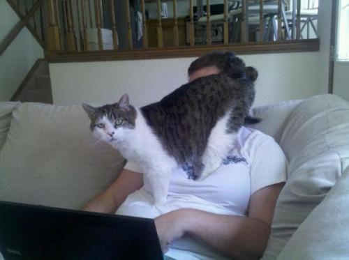 猫の恐怖10