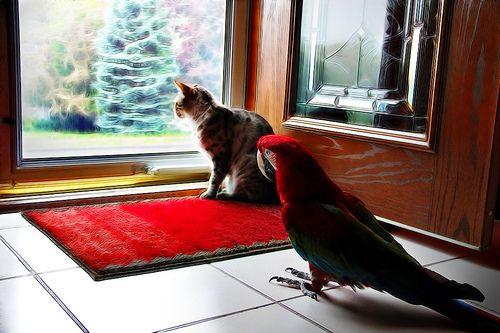 インコと猫19