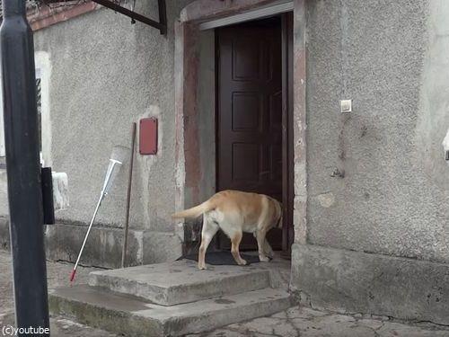 家に入りたい犬09