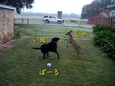 仲良しな犬と鹿
