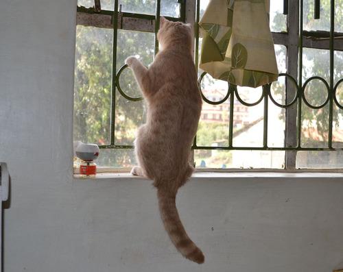 ケニアで子猫08