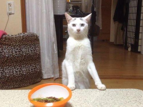 2本足で後ろ歩きする猫01
