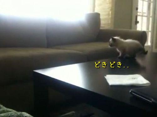 子猫が初めての大ジャンプに挑戦