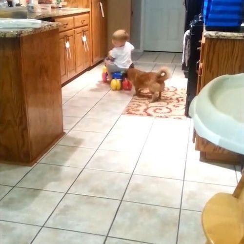 赤ちゃんをフェッチする犬02