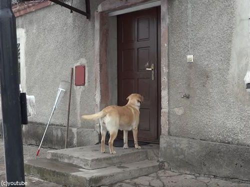 家に入りたい犬08