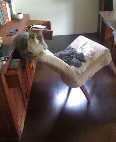 猫あるある04