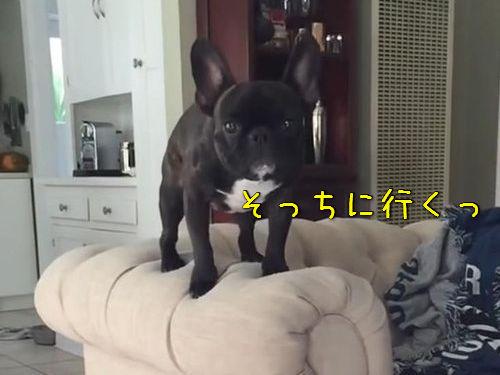 犬のジャンプ失敗00