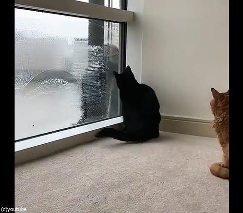 猫と窓掃除人が出会ったら01