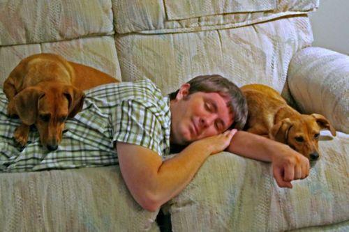 ペットと睡眠01