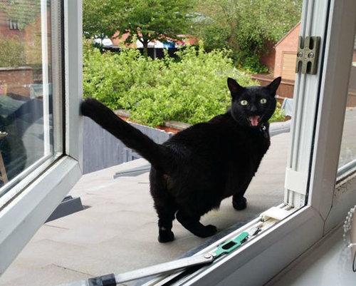 猫の初めての外出11