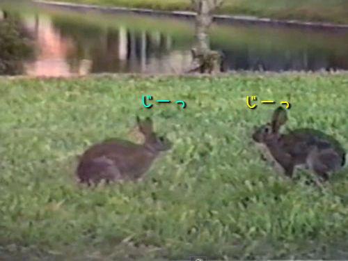 ウサギのジャンプ対決00
