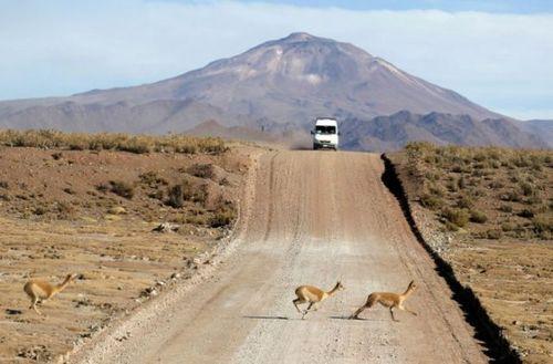 道路を渡る動物06