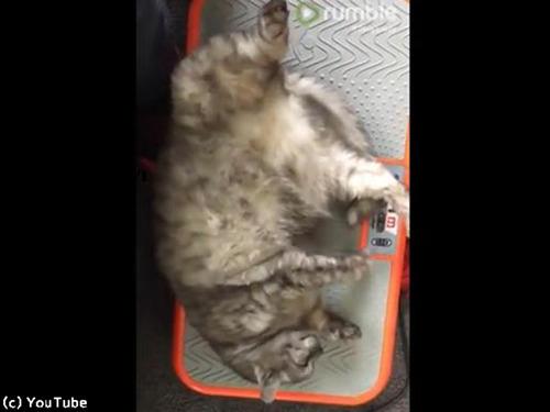 ダイエット器具でくつろぐ猫さん00
