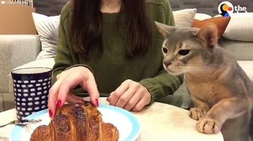 猫「クロワッサンください」02