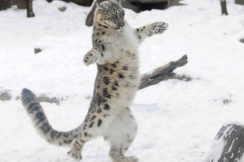 04Dance ダンス、踊る動物たち
