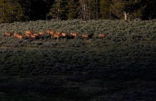 イエローストーン国立公園08