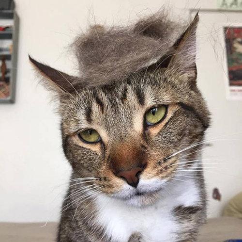 ブラッシングした猫の抜け毛をかつらに03