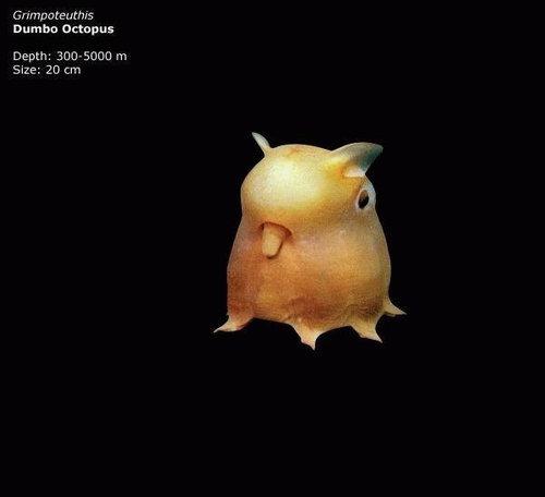 深海の生き物09
