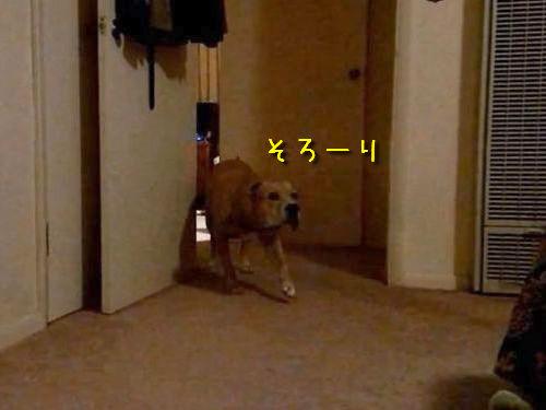 忍び足の犬