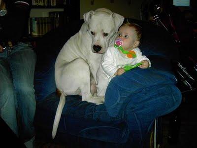 赤ちゃんとペット03