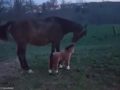 馬とぬいぐるみの馬03