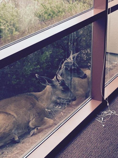 この会社の片側の窓01