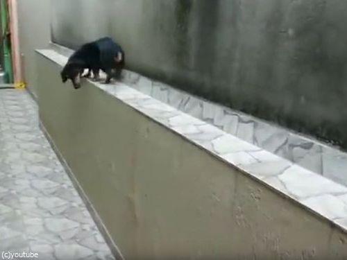 「この犬がどうやって窮地を脱出するかわかる?」05