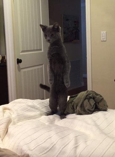 二本足で立つ猫と、立たない犬02