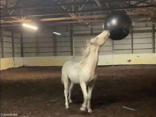 馬とエキササイズボール02