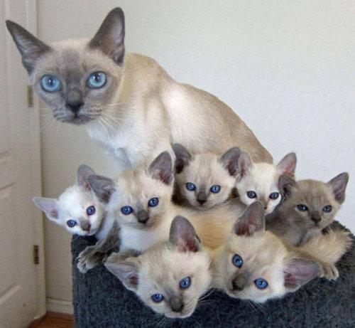 自慢の子猫たち02