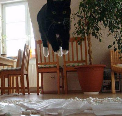 猫ジャンプ07