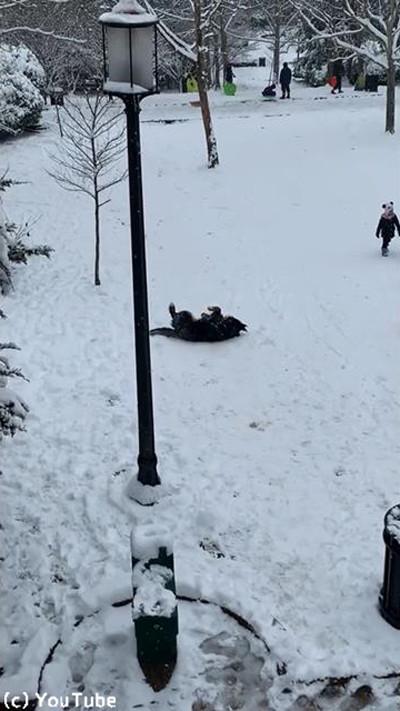 雪を愛してやまないワンちゃん03